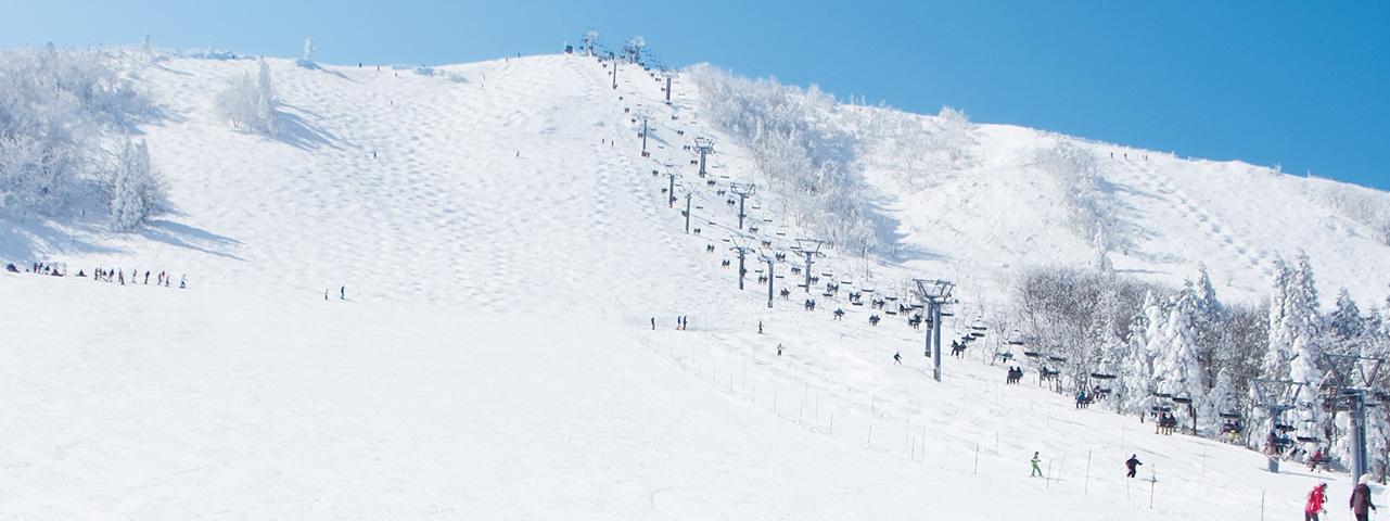 場 カメラ ハチ 高原 スキー ライブ
